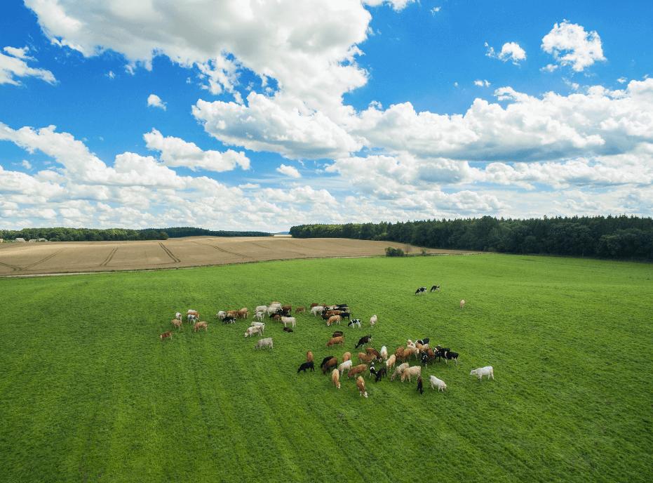 drones for livestock