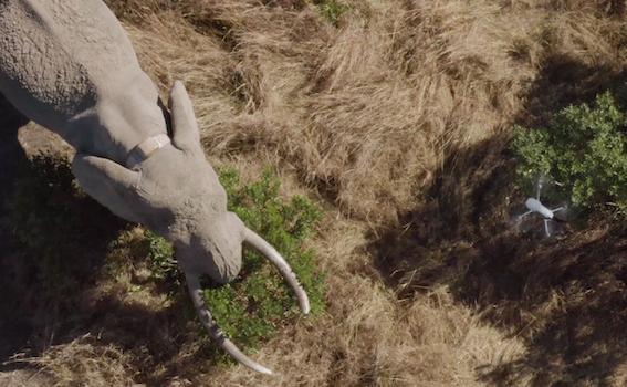 Drone Mara Elephant Project Kenya