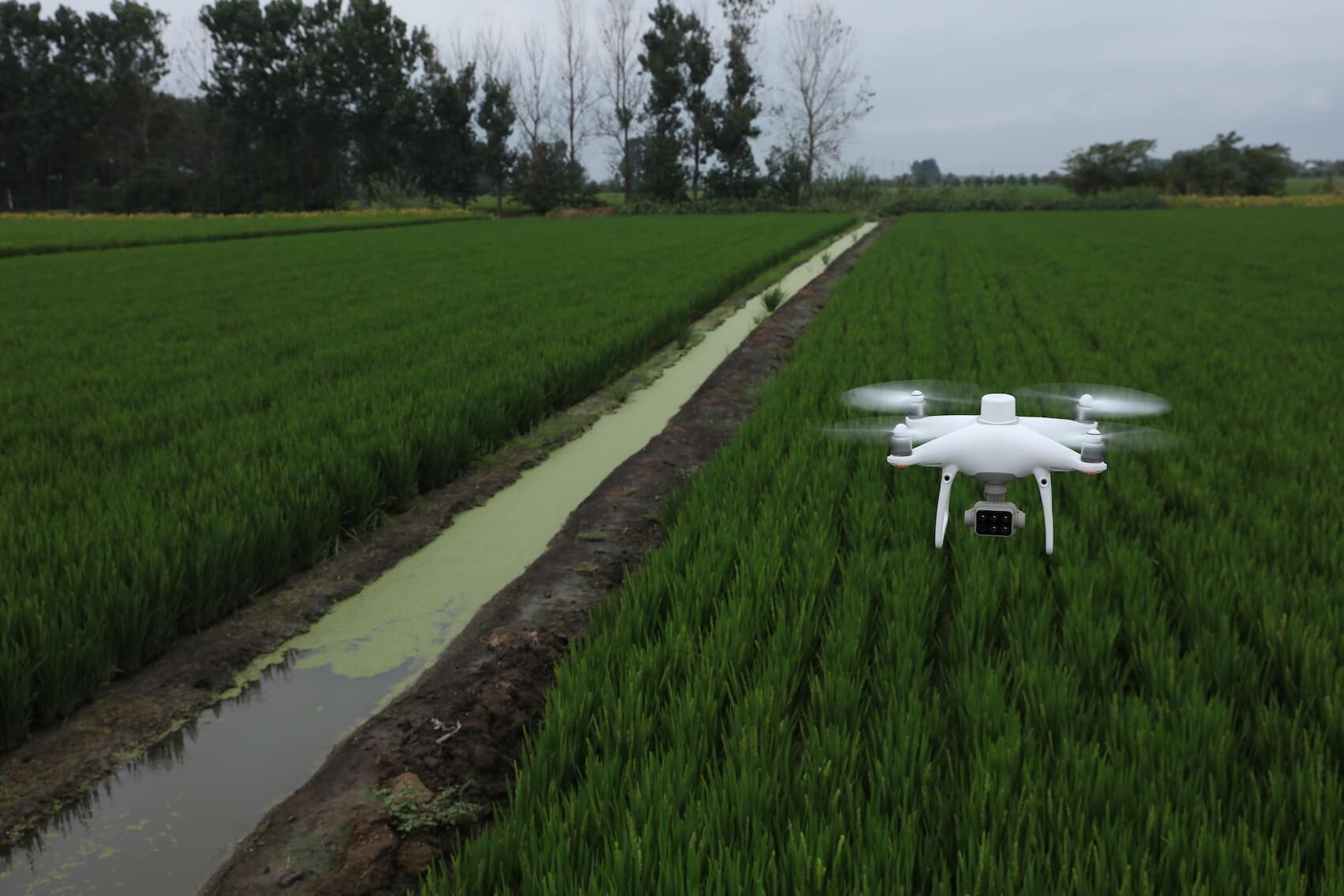P4 Multispectral precision agriculture