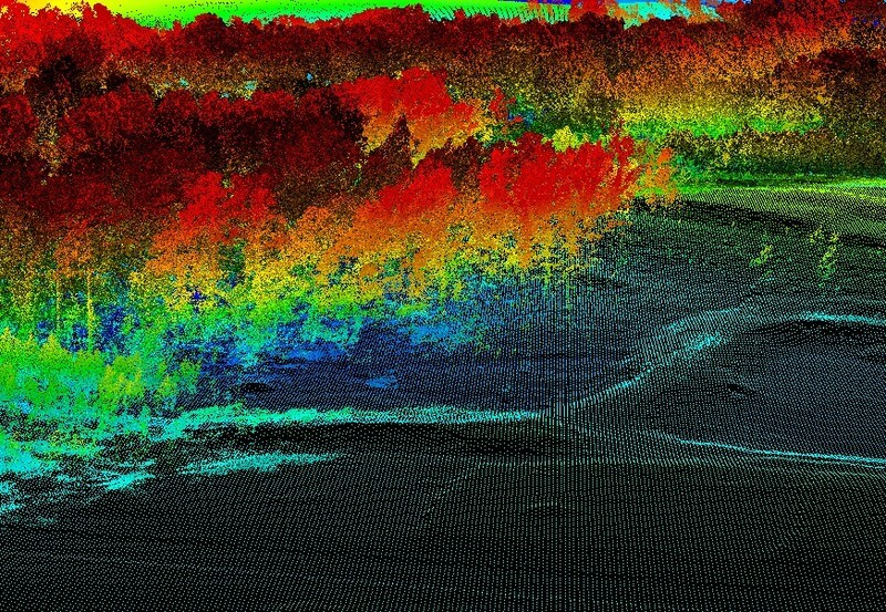 LiDAR point cloud of a forest